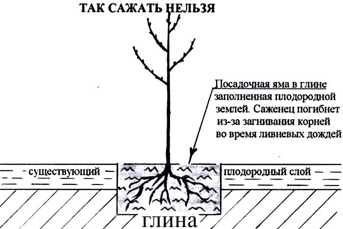 расстояние меж фруктовыми деревьями при посадке
